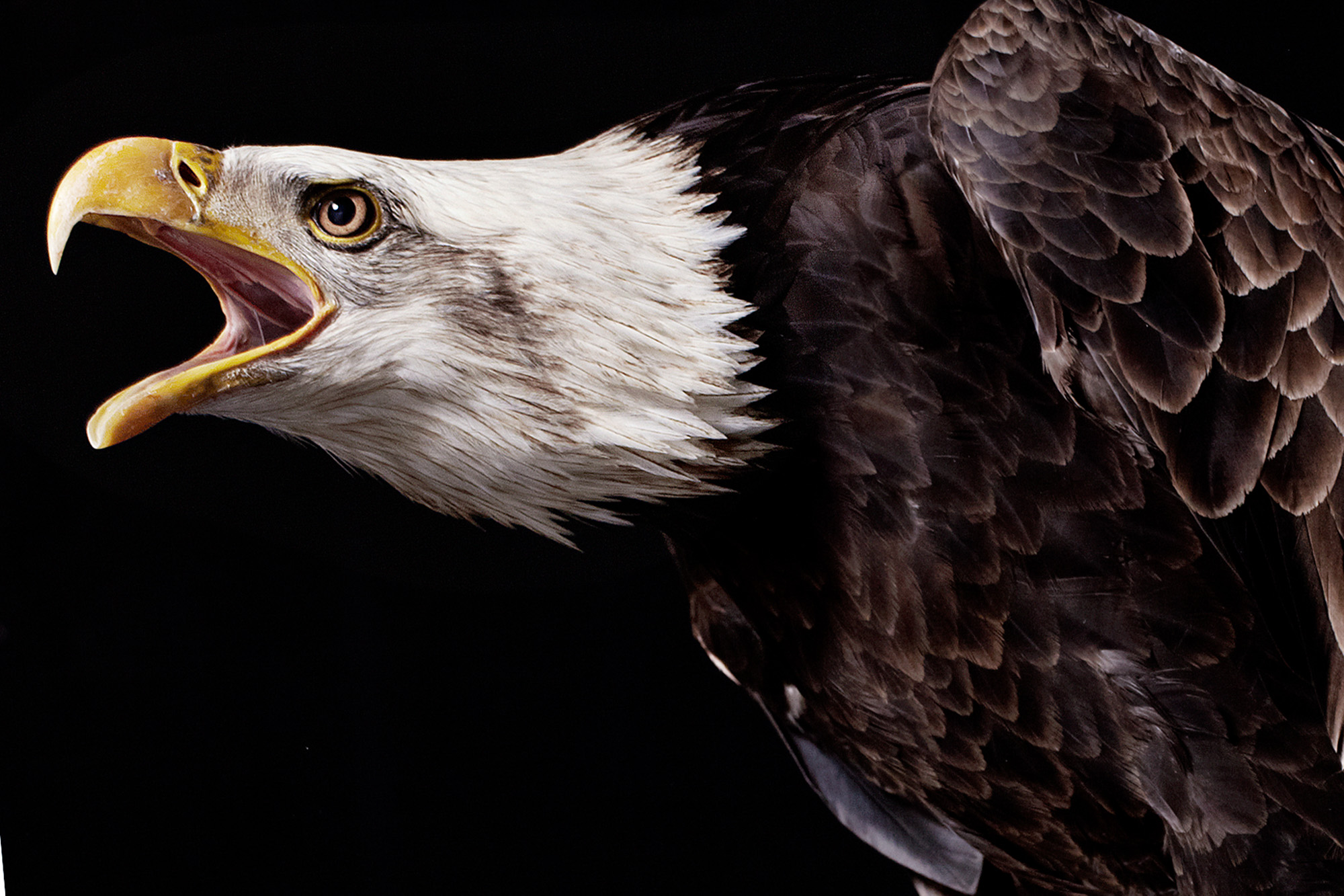 an01_eagle02