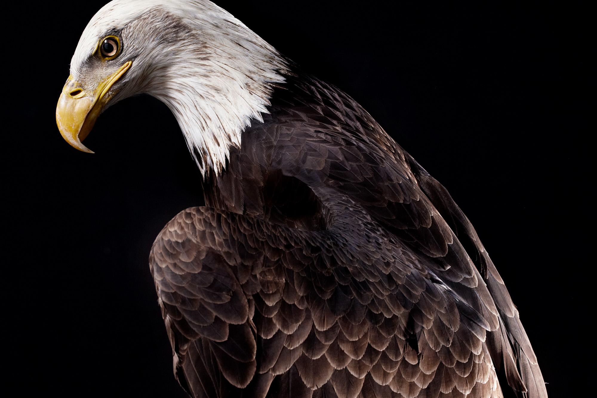 an01_eagle03