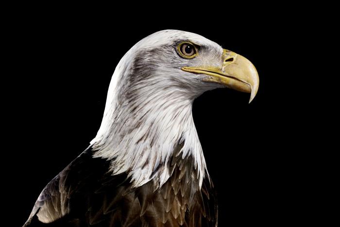 animal01_eagle01
