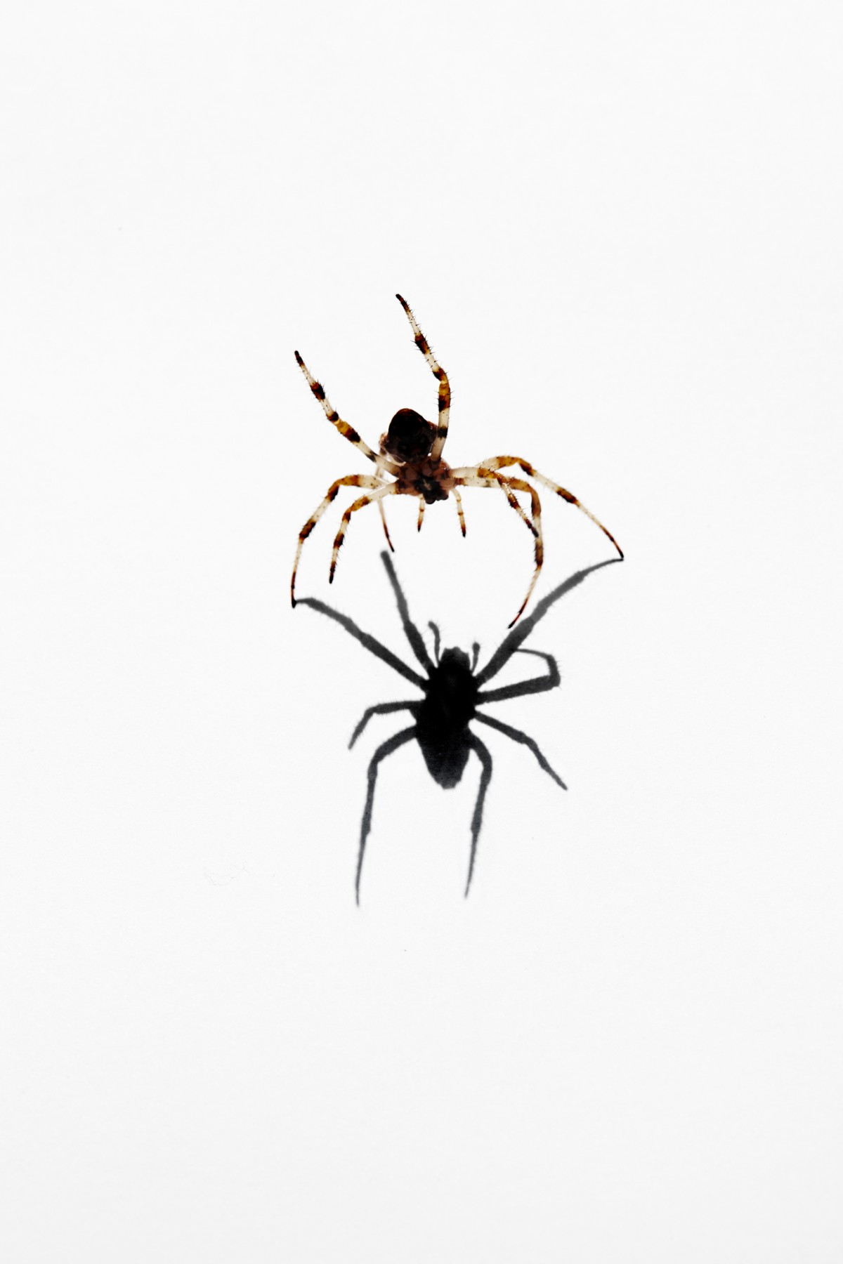 animal03_spider