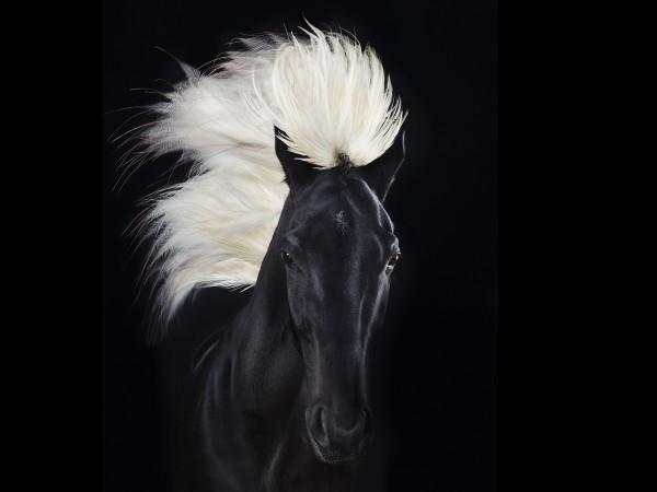 animal08_equus01