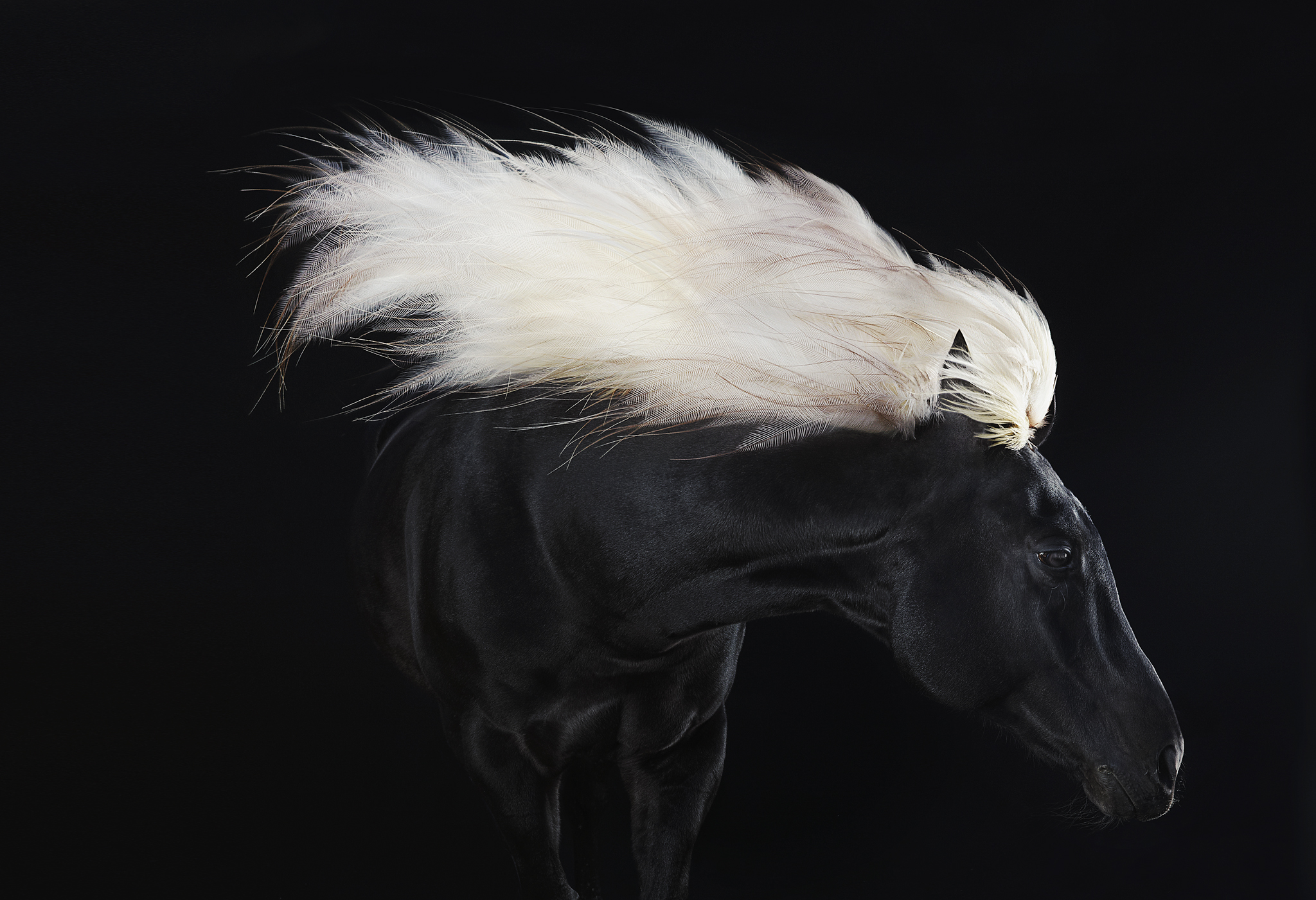 animal08_equus02