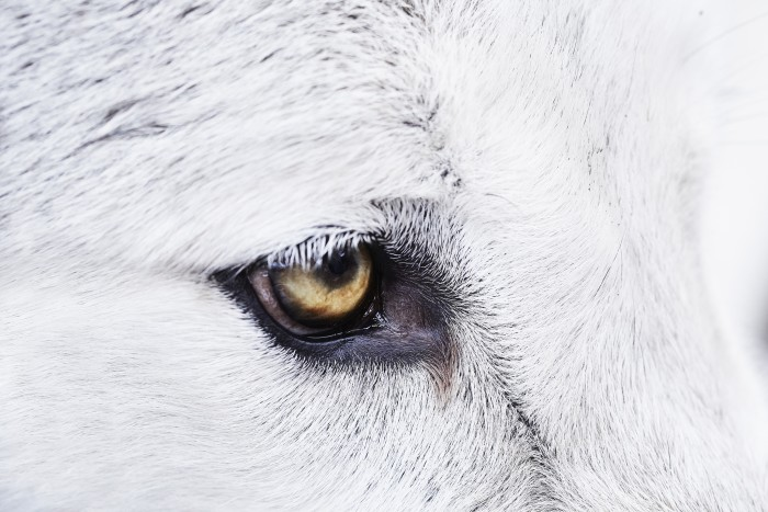 animal11_jack01