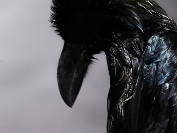 animal12_dip01