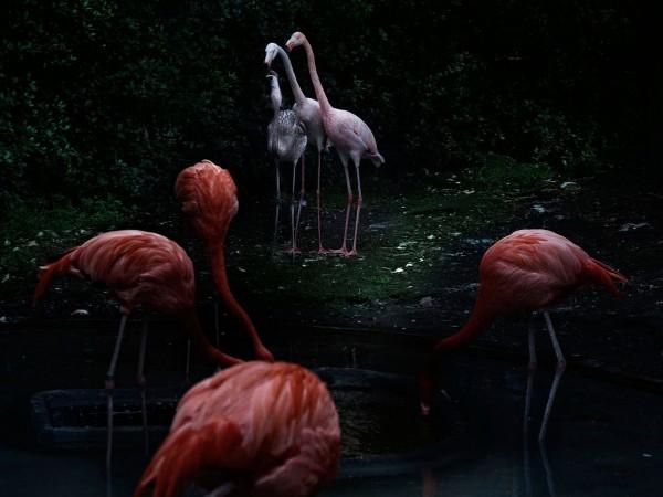 portfolio40_flamingo01
